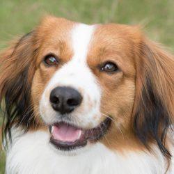 Verein der Hundefreunde